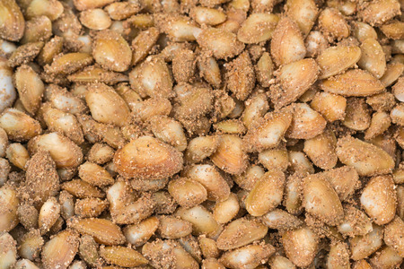 vittatus: Fresh raw banded wedge shell Stock Photo