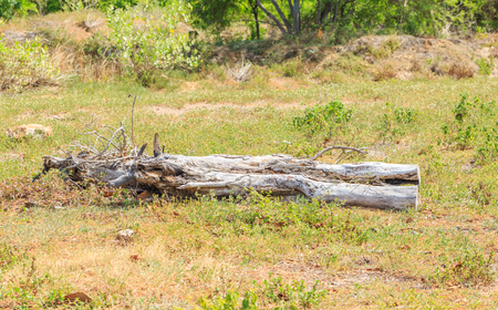 arboles secos: Los árboles muertos en el bosque
