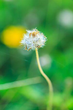 close up: close up gress flower Stock Photo