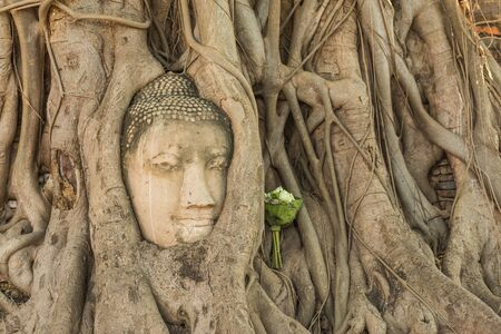ayuthaya: Head of Buddha statue in the tree roots at Wat Mahathat temple, Ayutthaya, Thailand