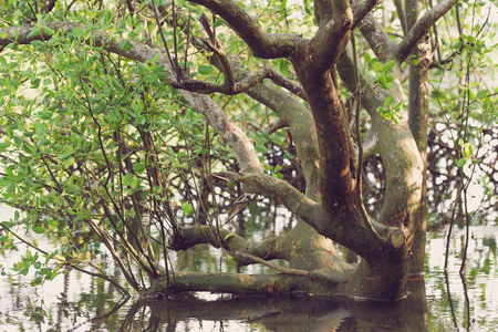 flooded: Flooded forest of mangrove trees