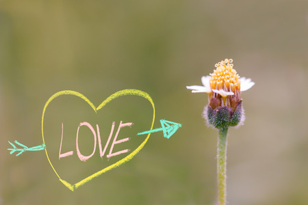 unwanted flora: Symbol of love with chalk and Flower of grass in sunlight Stock Photo