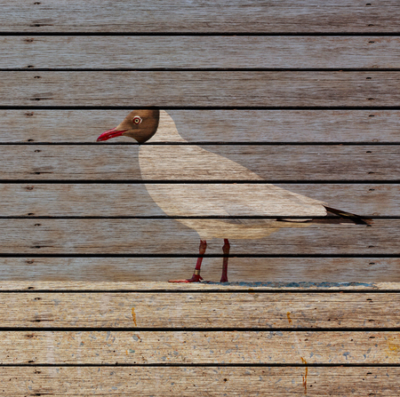 seabirds: Seagull standing on  Wood background