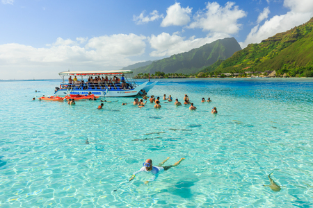 stingrays: PAPEETE, FRENCH POLYNESIA – JUNE 16, 2016 : The Tourists swimming and feeding sharks and Stingrays in beautiful sea at Moorae Island, Tahiti PAPEETE, FRENCH POLYNESIA on June 16, 2016