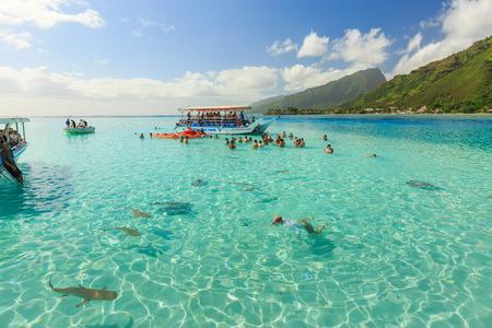 stingrays: PAPEETE, FRENCH POLYNESIA – JUNE 14, 2016 : The Tourists swimming and feeding sharks and Stingrays in beautiful sea at Moorae Island, Tahiti PAPEETE, FRENCH POLYNESIA on June 14, 2016 Editorial