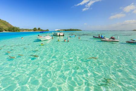 stingrays: PAPEETE, FRENCH POLYNESIA – JUNE 14, 2016 : The Tourists swimming and feeding sharks and Stingrays in beautiful sea at Moorae Island, Tahiti PAPEETE, FRENCH POLYNESIA on June 14, 2016