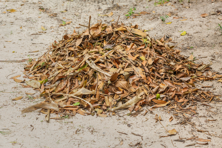 pile of leaves: Pile of Leaves on ground