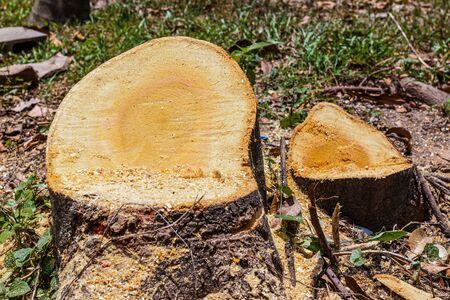 deforestacion: tocón de árbol, la deforestación en el fondo