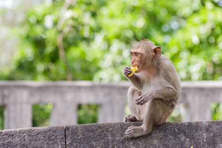 Cute monkeys lives in a town of Thailand