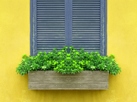 flower box: Window with flower box and yellow wall