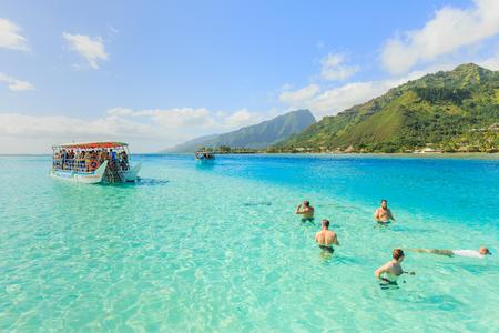 stingrays: PAPEETE, FRENCH POLYNESIA - NOVEMBER 2, 2016 : The Tourists swimming and feeding sharks and Stingrays in beautiful sea at Moorae Island, Tahiti PAPEETE, FRENCH POLYNESIA.