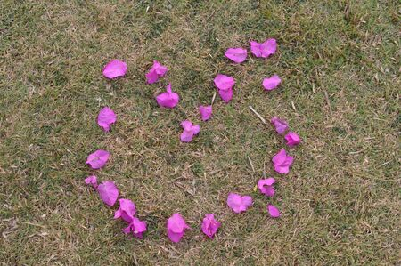 bougainvillea Corolla  heart