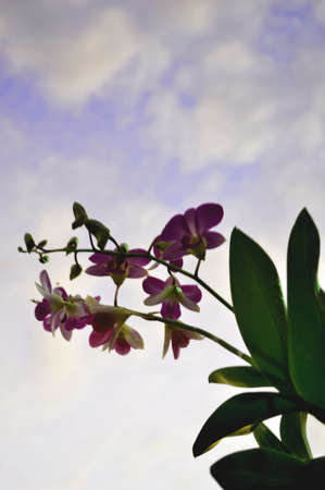 Purple orchid in sky