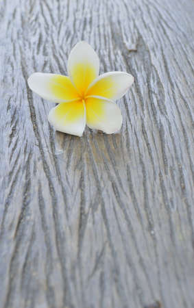 flowers frangipani on wood photo