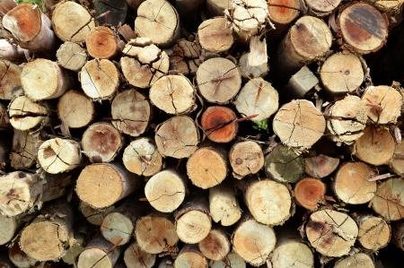 Use Eucalyptus timber affter construction Stock Photo