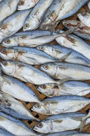 Fresh raw mackerel fish on bamboo Threshing basket photo