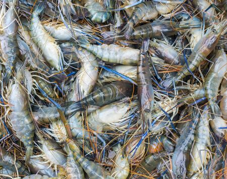Fresh Shrimp in market photo