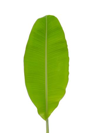 Banana leaf isolated  white background  Stock Photo