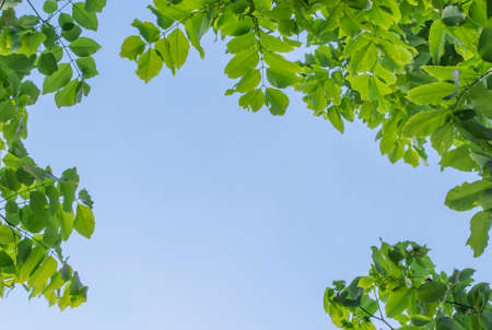 Green leaves with blue sky