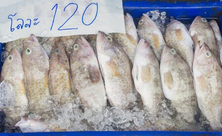 small Grouper fish in seafood market photo