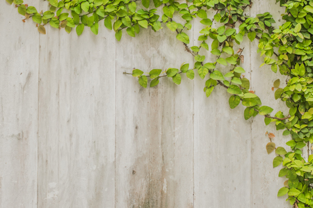 ivy leaf frame on plank wood wall photo