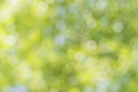 bokah of Sunny abstract green nature background Stock Photo