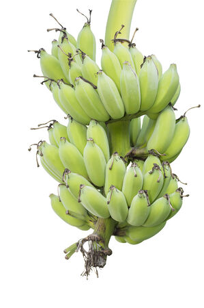 green bananas isolate white background  Stock Photo