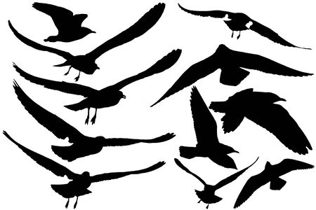 set of eleven Seagulls flying, black  silhouettes on white background Stock Photo