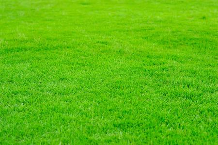 Green Grass filed