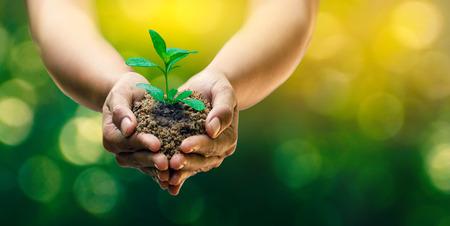 Entre les mains des arbres qui poussent des semis. Bokeh fond vert femme main tenant l'arbre sur le terrain de la nature herbe concept de conservation de la forêt