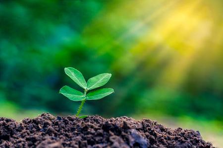 día mundial del día de guerra de la siembra de temporada planta joven en la luz del sol en el fondo la naturaleza