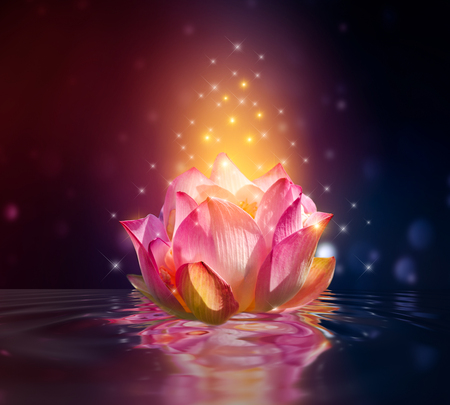 lotus Pink floating light sparkle purple background