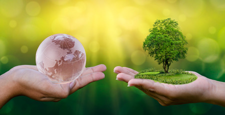 Concept Save the world save environment The world is in the hands of the green bokeh background In the hands of trees growing seedlings. Bokeh green Background Female hand holding tree on nature field grass Forest conservation concept 写真素材