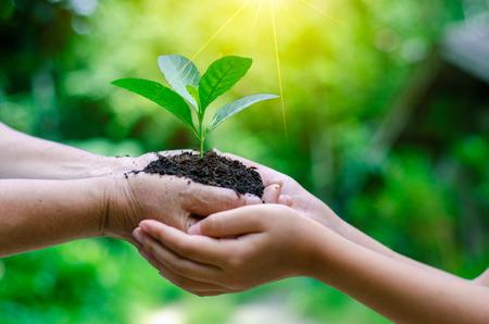 Volwassenen Baby Hand boom milieu Earth Day In de handen van bomen die zaailingen kweken. Bokeh groene achtergrond Vrouwelijke hand met boom op natuur veld gras Bosbehoud concept Stockfoto