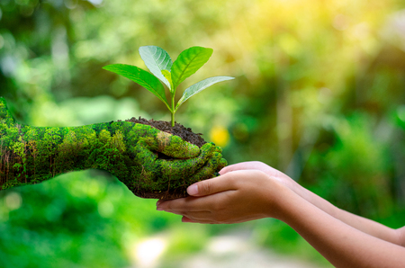 medio ambiente Día de la Tierra En manos de los árboles que crecen plántulas. Fondo verde Bokeh mano femenina sosteniendo el árbol en la naturaleza campo césped concepto de conservación forestal