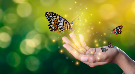 Butterflies are in the hands of girls with glittering lights sweet encounter between a human hand butterfly Stock Photo