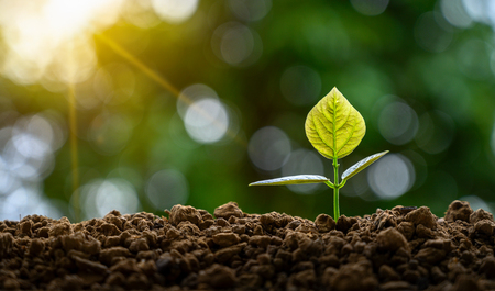 Ontwikkeling van de groei van zaailingen Zaailingen jonge plant planten in het ochtendlicht op de achtergrond van de natuur
