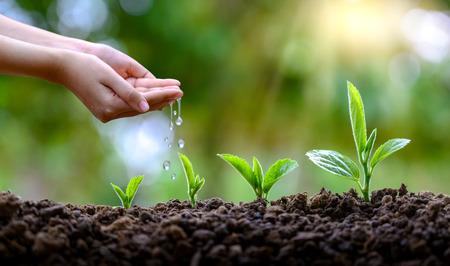 Entre les mains des arbres qui poussent des semis. Bokeh fond vert femme main tenant un arbre sur la nature champ herbe concept de conservation de la forêt