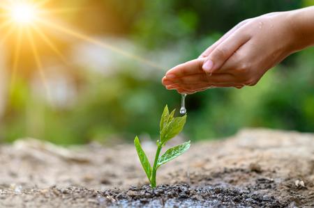 In de handen van bomen die zaailingen kweken. Bokeh groene achtergrond Vrouwelijke hand met boom op natuur veld gras Forest behoud concept Stockfoto