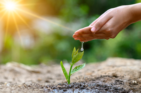 In the hands of trees growing seedlings. Bokeh green Background Female hand holding tree on nature field grass Forest conservation concept Stockfoto