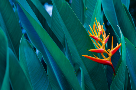 tropical leaves colorful flower on dark tropical foliage nature background dark green foliage nature Standard-Bild