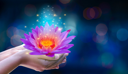 In the hands of a flower lotus Pink light purple floating light sparkle purple background Stock Photo
