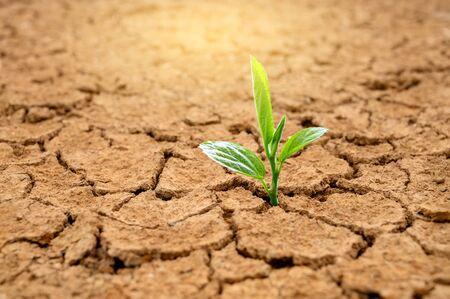 Los árboles crecen en suelo seco Concepto Bosque y conservación de la naturaleza