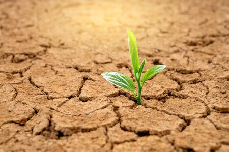 Trees are growing in dry ground Concept Forest and nature conservation Stockfoto