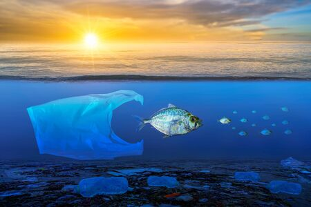 Fish that are approaching dying, floating on the surface, the impact of plastic waste in the sea concepts of nature conservation and the sea Reklamní fotografie