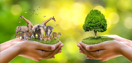 Concept Nature reserve conserve Wildlife reserve tiger Deer Global warming Food Loaf Ecology Human hands protecting the wild and wild animals tigers deer, trees in the hands green background Sun light Banco de Imagens - 132064102