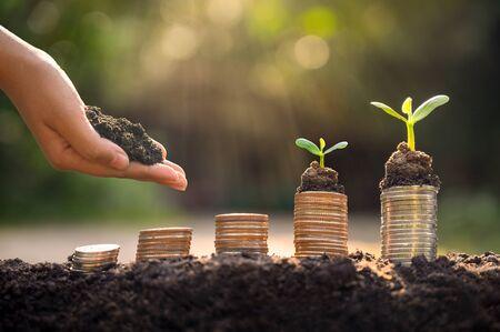 Wzrost pieniędzy Oszczędność pieniędzy. Monety z górnego drzewa do pokazanej koncepcji rozwijającego się biznesu