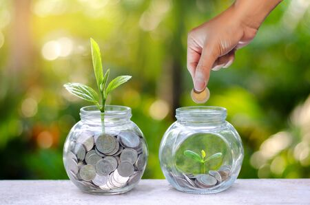 Coin tree Glass Jar Plant growing from coins outside the glass jar on blurred green natural background money saving and investment financial concept Stok Fotoğraf