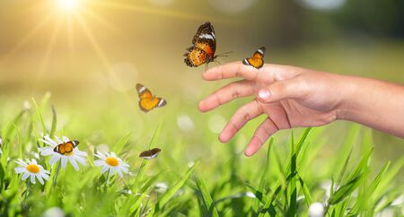 a butterfly leans on a hand among the golden light flower fields in the evening Stock fotó
