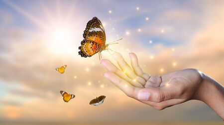 a butterfly leans on a hand among the golden light flower fields in the evening